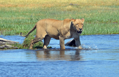 The-best-of-Moremi-and-Chobe