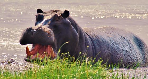 Okavango wilderness safari