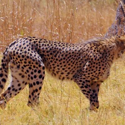 namibia-wildlife-experience